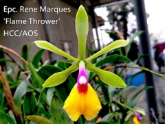 Epc. Rene Marques 'Flame Thrower' HCC/AOS