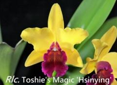 Rlc. Toshie's Magic 'Hsinying'