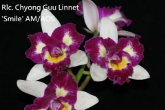 Rlc. Chyong Guu Linnet 'Smile' AM/AOS (Haw Yuan Beauty x Tzeng-Wen Beauty)