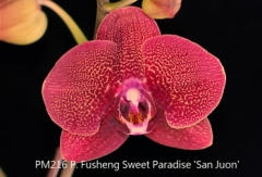 P. Fusheng Sweet Paradise 'San Juon'