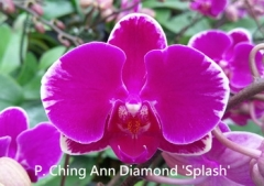 P. Ching Ann Diamond
