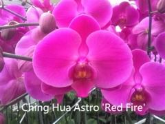 P. Ching Hua Astro
