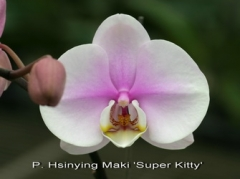 P. Hsinying Maki