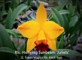 Rlc. Hsinying Sunbeam 'Juliets' (C. Tokyo Magic x Rlc. Kat E-Sun)
