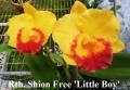 Rth. Shion Free 'Little Boy'