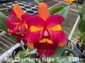 Rlc. Chunfong Little Sun 'KW'