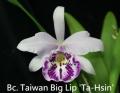 Bc. Taiwan Big Lip 'Ta-Hsin'