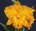 Rlc. Spanish Eyes